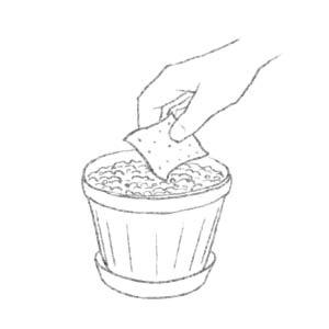 cum se planteaza cardul cu seminte, plantable paper